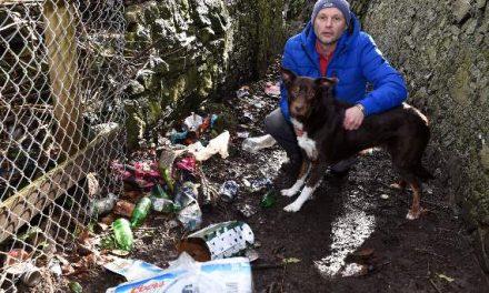 Pet cuts open paw on broken bottle